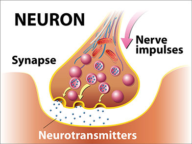 neurotransmitter, nerves